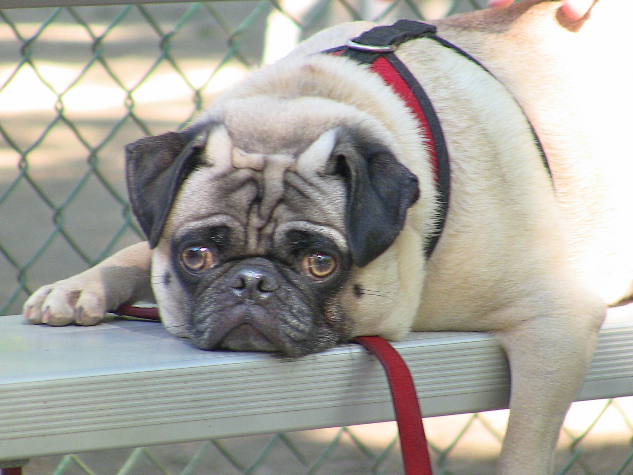In Pug on September 18, 2010 at 6:49 am