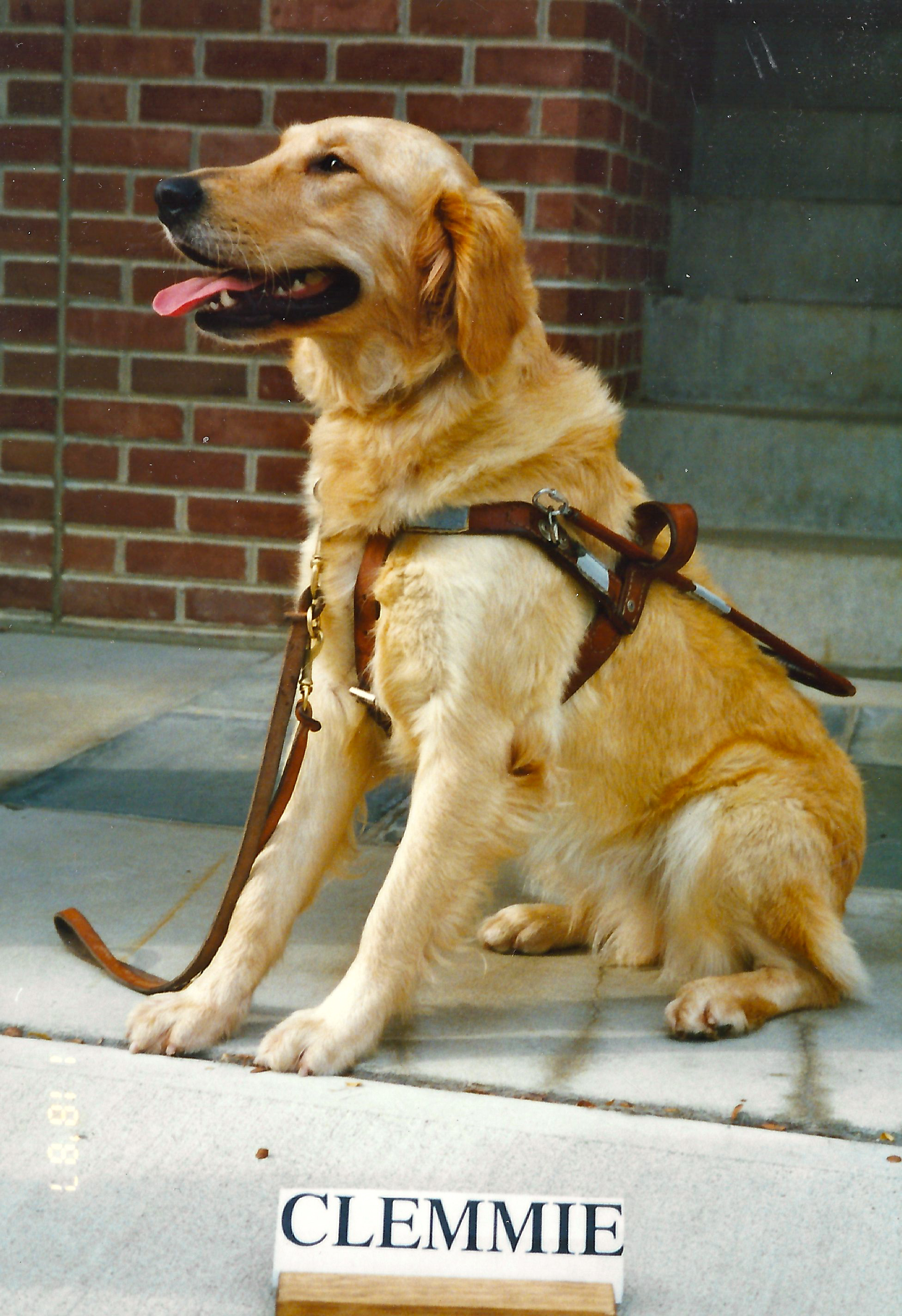 Seeing Eye Dog Images Seeing Eye Dogs | Tiffy's