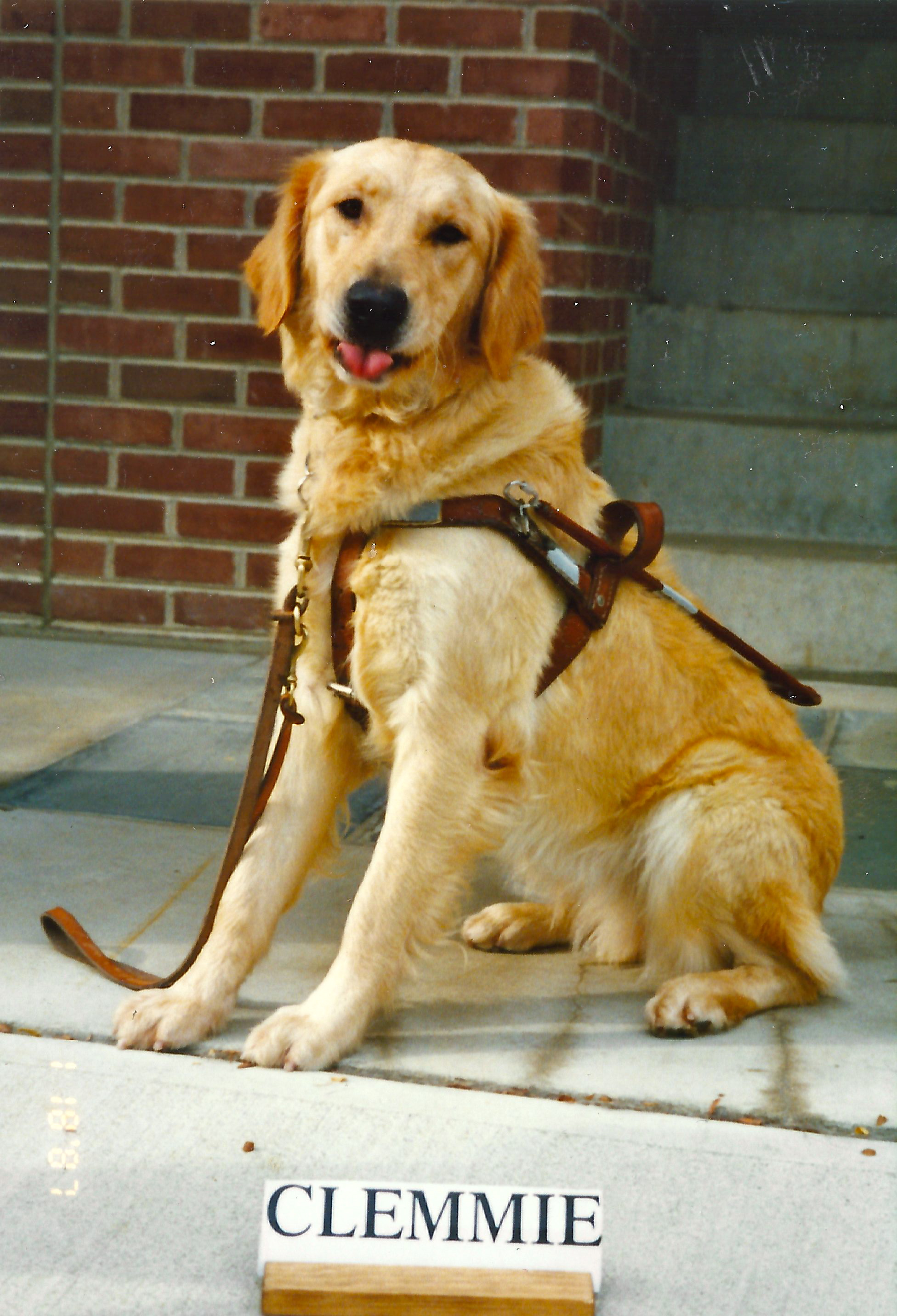 Seeing Eye Dog Images Tiffy's World