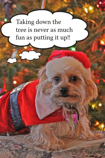 Taking Down the Christmas Tree | Tiffy's World